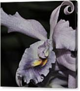 Laeliocattleya Blue Boy 1 Of 2 Canvas Print