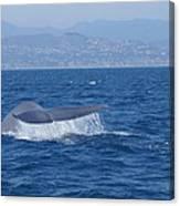 Laguna Whale Canvas Print