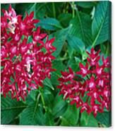 Lahaina Flowers 1 Canvas Print