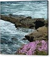 Lajolla Shore Canvas Print