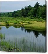Lake And Bog Canvas Print