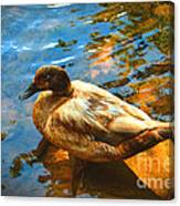 Lake Duck Vignette Canvas Print