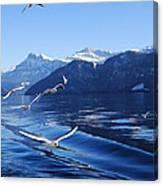 Lake Lucerne Seagulls Canvas Print