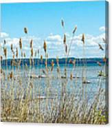 Lake Michigan Shore Grasses Canvas Print