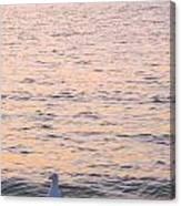 Lake Michigan Sunset With Birds Canvas Print