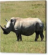 Lake Nakuru White Rhino Canvas Print