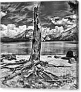 Lake Tenaya Giant Stump Black And White Canvas Print