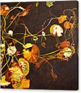 Lake Washington Lily Pad 14 Canvas Print