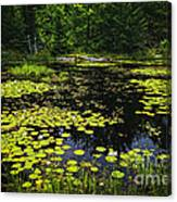 Lake With Lily Pads Canvas Print