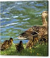 Lakeside Stroll 9836 Canvas Print