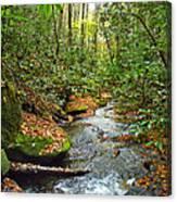 Lamance Creek  Canvas Print