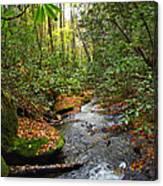 Lamance Creek Vertical Canvas Print