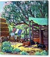 Lamb's Barn Canvas Print