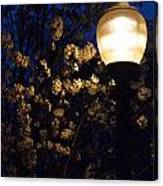 Lamplight 1 Canvas Print