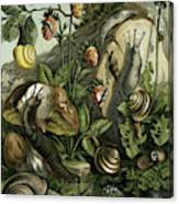 Land Molluscs Or Snails And Slugs Canvas Print