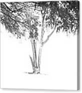 Landscape 14 Canvas Print