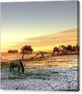 Landscape And Horse Canvas Print
