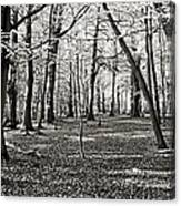 Landscape In The Woods Canvas Print