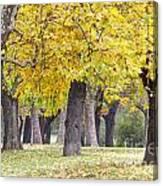 Landscape With Autumn Trees Canvas Print