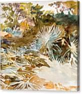 Landscape With Palmettos Canvas Print