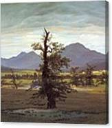 Landscape With Solitary Tree Canvas Print