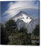 Lanin Volcano And Araucaria Trees Canvas Print