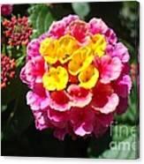 Lantana Blooms And Buds Canvas Print