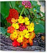 Lantana Flowers 2 Canvas Print