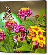 Lantana With Butterfly Canvas Print