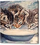 Lap Of Luxury Kittens Canvas Print