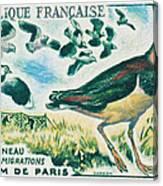 Lapwings Study Of Migration Museum Of Paris Canvas Print