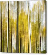 Larch Grove Blurred Canvas Print