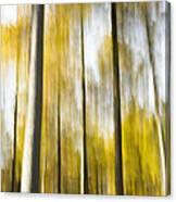 Larch In Abstract Canvas Print
