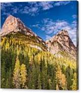 Larch On A Slope Canvas Print