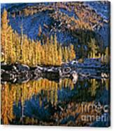 Larch Tree Reflection In Leprechaeun Lake  Canvas Print