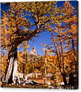 Larches Frame Prusik Peak Canvas Print