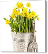 Large Bucket Of Daffodils Canvas Print