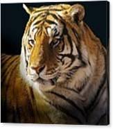 Large Cat Beauty Canvas Print