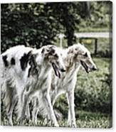 Large Dogs On The Prowl Canvas Print