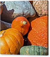 Large Edible Gourds Canvas Print