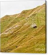Large Flock Of Herded Sheep On A Steep Hillside Canvas Print