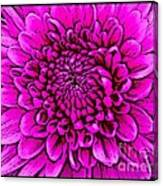 Large Pink Dahlia Retro Style Canvas Print