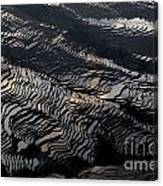 Large Scale Of Rice Terrace Canvas Print
