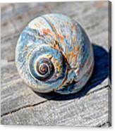 Large Snail Shell Canvas Print