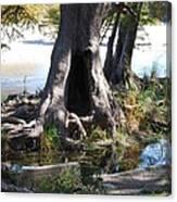 Large Tree Trunk Canvas Print