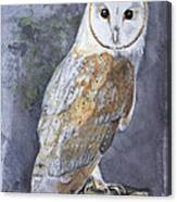Large White Barn Owl Canvas Print