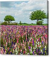Larkspur Fields Forever Canvas Print