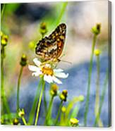 Last Bloomin Flower  Canvas Print
