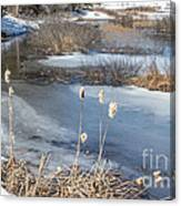 Last Days Of Winter Canvas Print