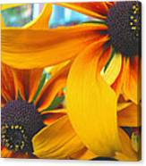 Last Holdouts Of The Season - Black Eyed Susans - Floral Photography Canvas Print